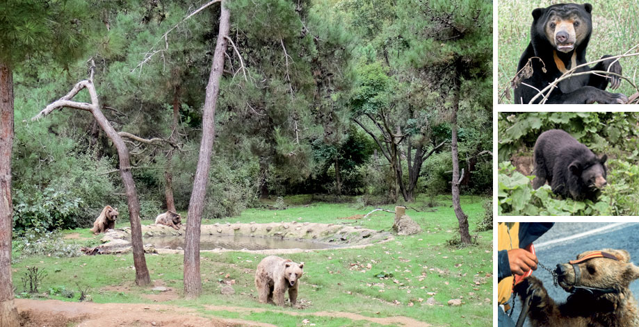 Bears Sanctuary